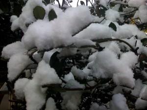2009年3月12日福井は雪が降りました